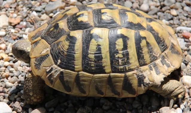 Van schildpad tot en met hond of paard: alle zijn ze op 4 oktober een extra verwennerij waard. FOTO: Hanny van Eerden
