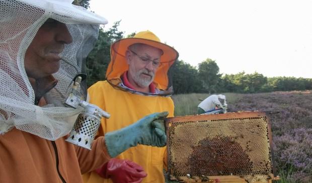 Controle van bijenvolken op de heide.