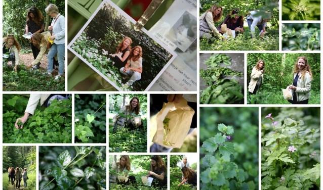 Collage van eetbare planten en kruiden die wildplukker Leoniek Bontje en voedingsdeskundige Yvet Noordermeer van De Buitenkeuken tegen kunnen komen op hun 'strooptochten'. Een tikje clandestien, want wildplukken is formeel een vorm van stropen.