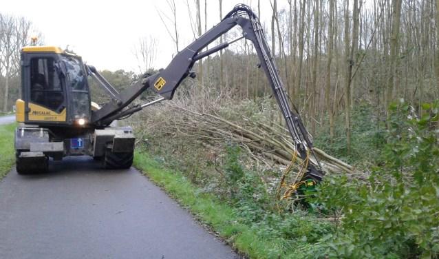 Boswachter Dick van Stegeren had slecht nieuws. Aangetaste essen en enkele andere bomen die een gevaar vormen voor voorbijgangers worden verwijderd in de Rottemeren.