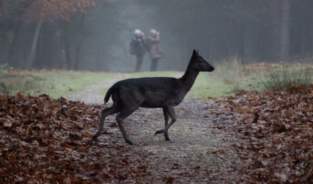 Om wild te spotten in het Deelerwoud, moet je wel de juiste kant opkijken...