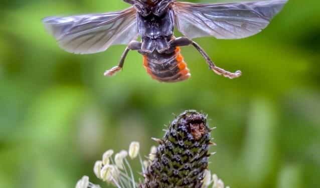 René Krekels verzorgt in Beers de lezing Insecten in beeld (foto René Krekels)