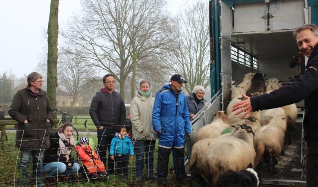 Onder het toeziend oog van herder Terpstra (links met pet) en wethouder van Willigen (rechts) gaan de schapen de vrachtwagen in. (foto: Sigrid Aalfs)