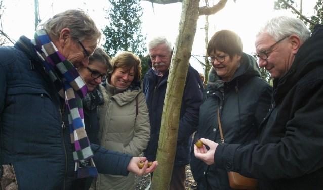 Gids Dick Nieuwesteeg (l) toont zijn gezelschap de geheimen van de mispelboom tijdens de winterwandeling op de Sortimentstuin Harry van de Laar. Dick: 'Ik zal jullie een vergeten vrucht laten zien, het geheim van de mispelboom.' FOTO: Morvenna Goudkade