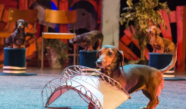 Wintercircus Arlette Hanson is zaterdag met de nieuwe voorstelling 'Fraaie Fratsen!' te gast in Theater De Leest. Foto: Piet Hein Out