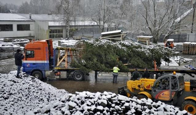 de kerstboom werd op transport gezet