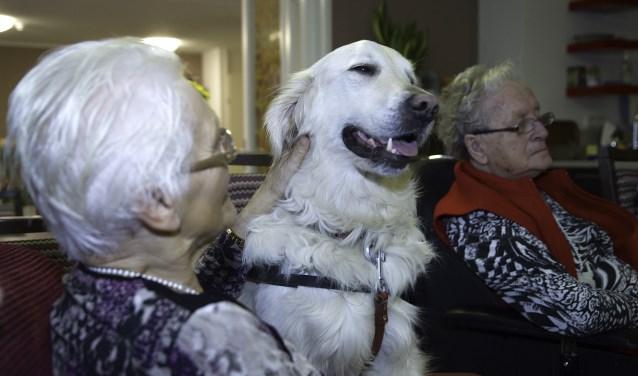 Hulphond Guus is op bezoek bij Nieuw Avondrust.
