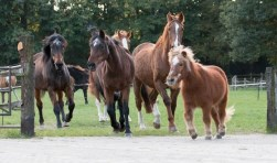 Foto: Anouschka Canters i.o.v. Stichting De Paardenkamp