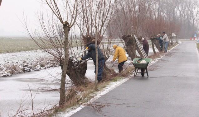 Bewoners 't Woudt snoeien eens per jaar de knotwilgen in het buurtschap. Ze proberen zo het karakteristieke landschap te behouden. (Foto: Cees van Swieten)