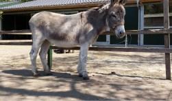 Sorbo tegen de achtergrond van de nieuwe stallen. Hij wordt nu begrepen en grijpt zijn nieuwe kansen.