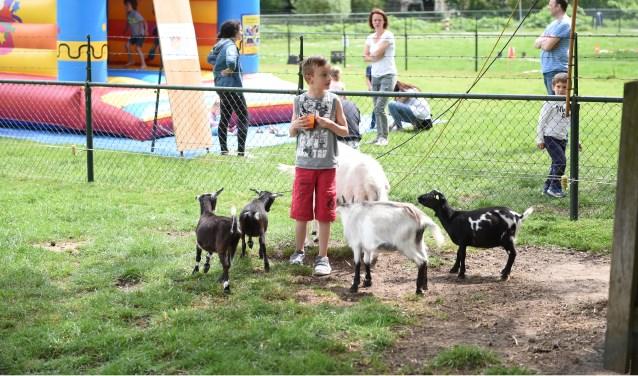 Ook deze nieuwsgierige geitjes vierden feest. Hun thuis, Kinderboerderij 't Veldje in Rosmalen bestaat 20 jaar. Dat markeerde de kinderboerderij zondag 21 mei met een feestje. Foto: Wilco van Esch