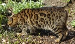 Dit is Mowgli, ze is het laatst gezien op de Horsterweg.