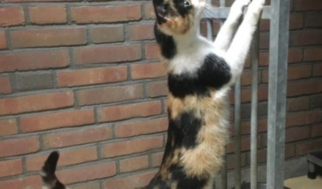 Deze kat is met drie kittens gevonden op de Biltseweg bij Spiehuis Soest.