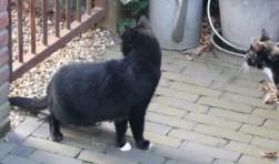 Dit is Jimmie, hij wordt vermist vanaf de Horsterweg.