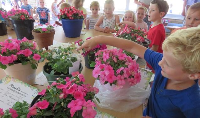 De kinderen van de Eben-Haëzerschool kregen van Floralia stekjes om thuis op te kweken.