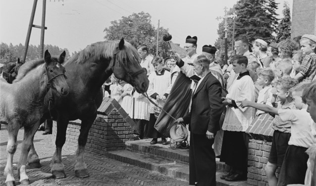 Welke herinneringen roept deze foto van de paardenzegening in Esch in 1952 bij jou op? Laat het ons weten!