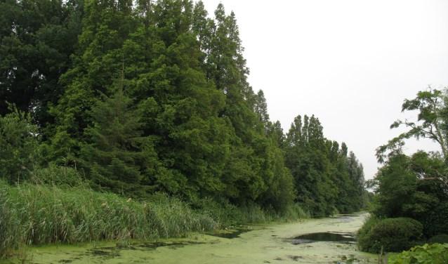 Het Spoorbos in Boskoop is een langgerekte bosstrook, ingeklemd tussen de spoorbaan en een waterrijk gebied met sloten. De actievoerders willen het bos behouden voor natuurontwikkeling en recreatie. (Foto: Morvenna Goudkade)