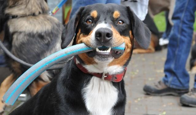 In Dorf Münsterland vindt binnenkort een enorme hondenbeurs plaats. Twee dagen lang is er van alles te doen voor zowel de baasjes als de viervoeters.