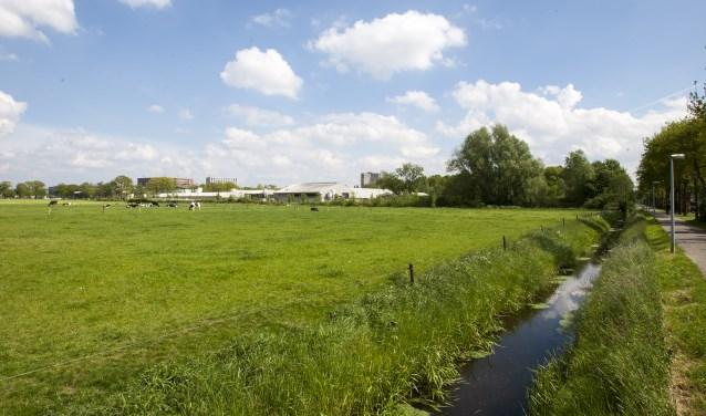 In een m.e.r.-traject kan de natuurwaarde van het Dassenbos nader onderzocht worden. foto: Johan Mulder