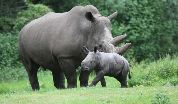 (foto: Theo Kruse/Burgers' Zoo)