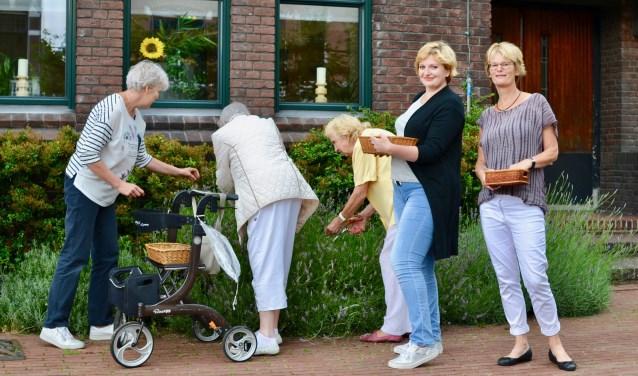 Bij De Bovenkamer is het altijd gezellig, maar iedere week anders. Zo knipten de deelnemers en vrijwilligers onlangs Lavendel bij De Windwijzer, om later te verkopen voor het goede doel. (Foto: Britt Planken)
