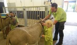 Op klompjes en in Weizigt-outfit hielpen de dierverzorgertjes in spe mee met het voeren, verzorgen en schoonmaken. (Foto: Privé)