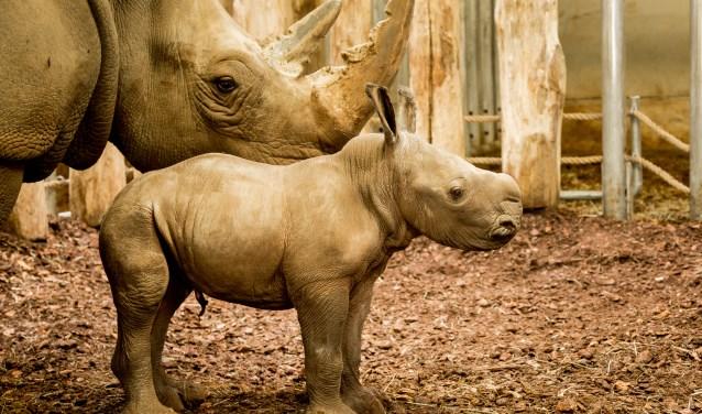 Foto Theo Kruse / Koninklijke Burgers' Zoo
