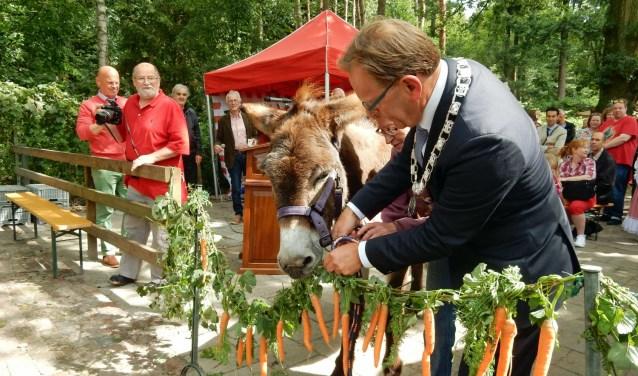Ezel Dieske opent op smakelijke wijze de nieuwe stallen. Burgemeester Koos Janssen kijkt of de ezel het allemaal goed doet. Vele honderden belangstellenden waren op de open dag af gekomen. Asta Diepen Stöpler
