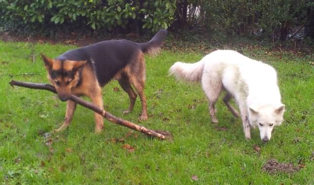 Loslopende honden zorgen voor overlast in het Galamapark in Elst.