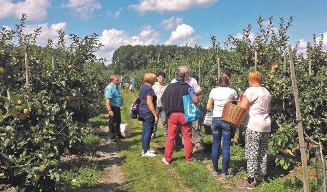 Zelf appels plukken en ze daarna mee naar huis nemen. Het kan bij Landwinkel De Oogsthoeve in Heteren.