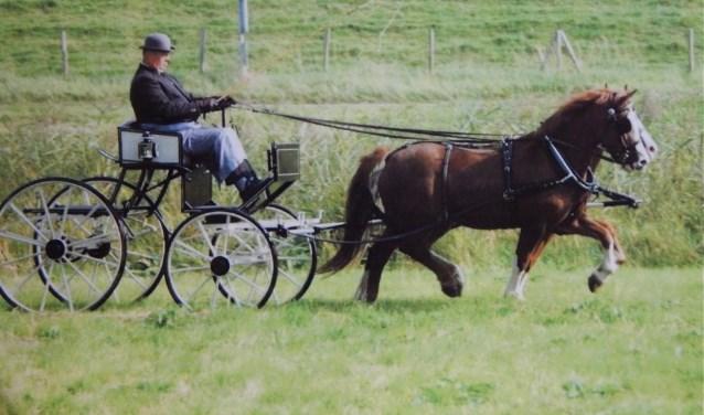 Teo Barth werd onder meer een keer Europees kampioen. De Welsh pony's zijn al sinds 1976 een passie voor de inwoner van 's-Gravendeel (Foto: privécollectie Teo Barth).