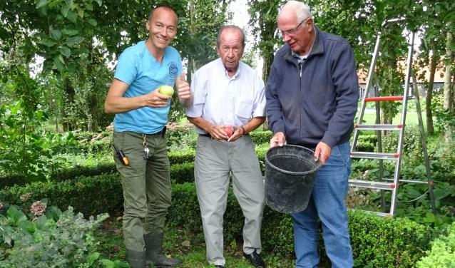 Mentor Aad Dekker (links) raapt samen met Bas en Kees afgewaaide appels. ''Het is hier hartstikke leuk. Er is van alles te doen.''