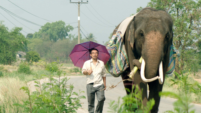 Thana en olifant Pop Aye gaan op zoek naar zichzelf.