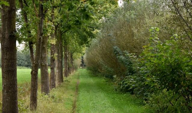 De Historische Schietbaan in Scherpenzeel staat niet standaard op de route maar het is zeker de moeite waard om er kijkje te nemen. Het is een mooie natuurlijke omgeving waar geregeld schapen grazen, die als natuurlijke beheerders van het terrein optreden. (Foto: Hetty Heijne)