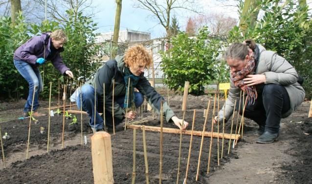 Van Grijs naar Groen is een moestuinenproject voor mensen uit Helmond.