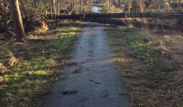 Het fietspad dat loopt van het Leenderbos naar de Heezerhut is geblokkeerd door omgewaaide bomen. Foto: Mari de Bijl