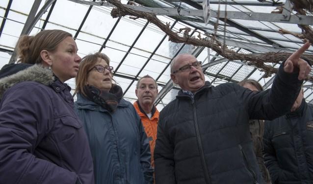 Henk Gertsen legt in de kassen van museum Mea Vota in Huissen uit waar je bij de wintersnoei van druiventakken op moet letten. Hij doet de deelnemers aan de cursus voor hoe ze te werk moeten gaan. (foto: Ellen Koelewijn)