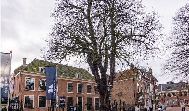 Tot en met 11 maart kunt u in het museum foto's, prenten, tekeningen en schilderijen van de boom bekijken.