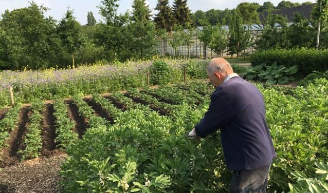 De voedseltuin in Landpark Assisië in Biezenmortel waar ruim 200 mensen met een verstandelijke beperking wonen en werken. Groenten, fruit en kruiden die worden geteeld zijn vooral bestemd voor de voedselpakketten van de Voedselbank in Biezenmortel en Boxtel.
