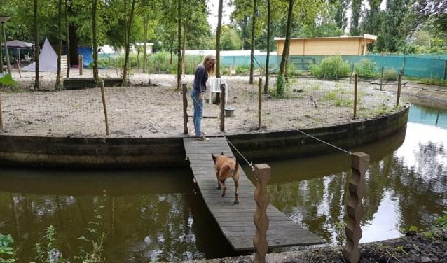 Kim Boers van Storumloop (hondenopvang- en training) begon in 2015 op het terrein van de voormalige waterzuivering. Beeld: Storumloop