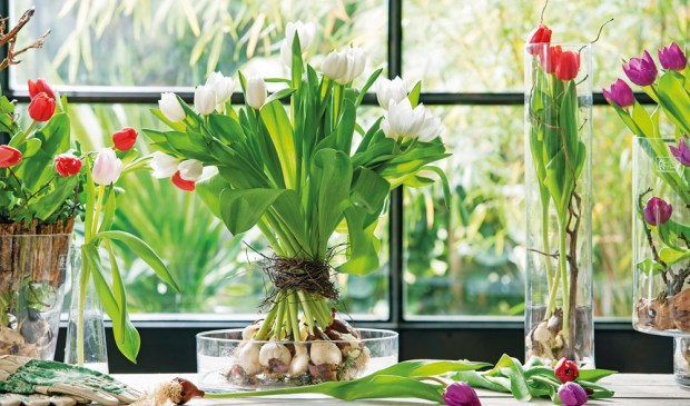 Tulpenfeest bij Intratuin