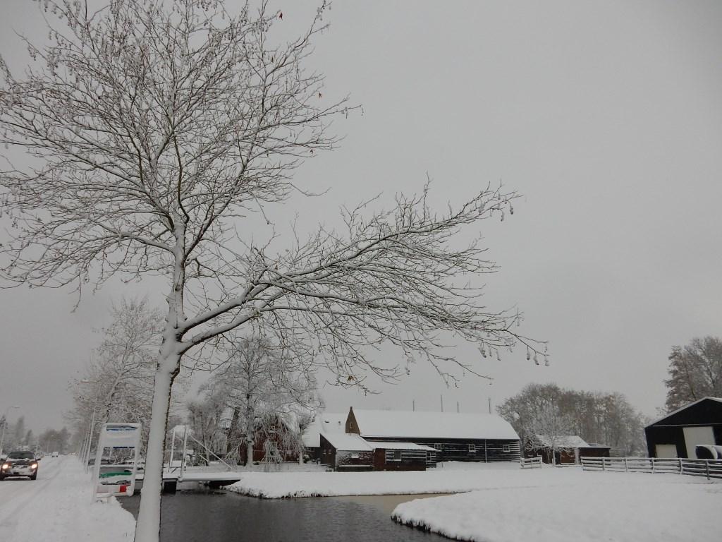 """""""Deze foto vind ik mooi omdat je met sneeuw een compleet ander beeld van Boskoop krijgt."""" Foto: Bert Jorritsma © Persgroep"""