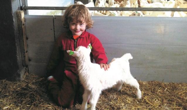 Deze maand worden er maar liefst 600 jonge geitjes verwacht op de geitenboerderij. (Foto: Theo Polman)