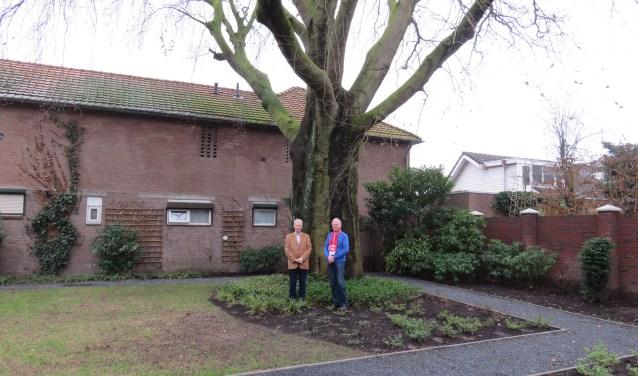 Een ruim 200 jaar oude rode beuk die aan de Schoolstraat staat is gekozen tot de mooiste monumentale boom van Ede op particulier terrein. Gijs van Reenen (l) is als bewoner van Villa d'Este, mede-eigenaar van de boom. Op deze plek was voorheen de garage van Douwe Heida (r) gelegen. (foto Doriet Willemen)