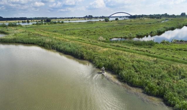 Meer informatie over muskusrattenbeheer vind je op de website waterschaprivierenland.nl/muskusrattenbeheer.