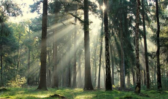 Het Loohuis wordt na het onderhuis een stuk lichter, wat weer meer kansen biedt voor bomen, planten en dieren. (foto: Natuurmonumenten - J. Snoeren)