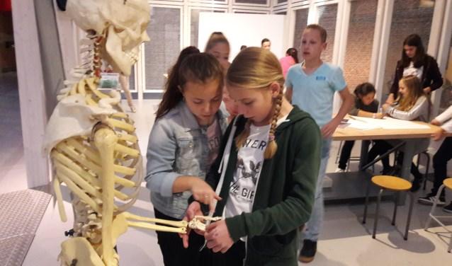 In de tentoonstelling 'Van nul- tot duizendpoot', die een groot aantal dierskeletten toont, onderzochten de leerlingen in groepjes de skeletkenmerken van klimmers, vliegers, lopers, springers en zwemmers.