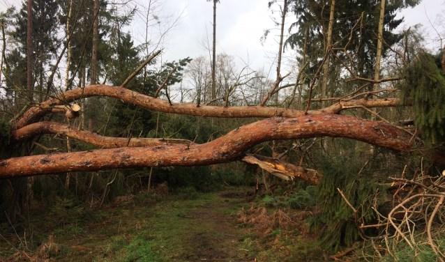 Het is nog te gevaarlijk om een boswandeling te maken. (foto: Natuurmonumenten - J. Pelgrum)