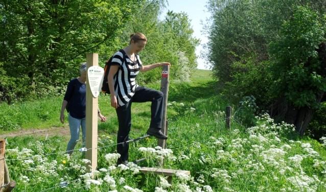 Het binnenkort te openen Rijnstrangenpad is het 111de Klompenpad van Nederland. Zevenaar heeft dan twee Klompenpaden! (foto: PR)