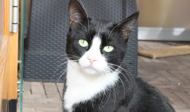 Figaro is een echte druktemaker.
